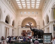the-field-museum-2