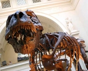 the-field-museum-4