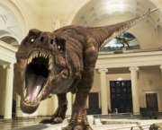 the-field-museum-5